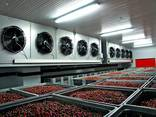 Шокова заморозка ягід, фруктів, овочів та грибів - фото 1