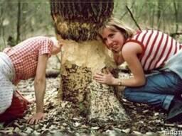 Сколько стоит срезать дерево, срезание деревьев, спил, киев
