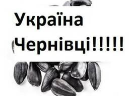 Куплю Подсолнух Черновцы Украина