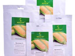 Кукурудза солодка Орландо F1, 4000 семян, ТМ Мнагор