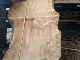 Слэбы из дерева Тополь каповый и Берест-эксклюзивные спилы - фото 1