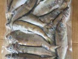 Смарида (Черноморский Окунь) с\м от рыболовной компании.