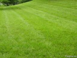 Семена газонных трав (Насіння газону) Теневой газон