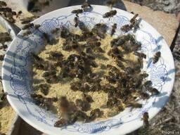Соевая мука для весенней подкормки пчел 2019