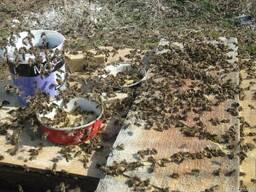 Подкормка пчел соевой мукой и белково-витаминной добавкой 19