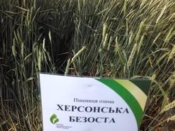 Сорт озимой пшеницы Херсонская Безоста елита