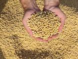 Соя без ГМО, соя с допустимым содержанием ГМО - фото 1