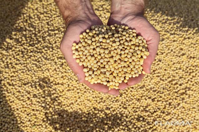 Соя без ГМО, соя с допустимым содержанием ГМО