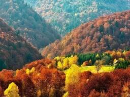 Спа тур в ЗАкарпатье в октябре, туры в Карпаты на Покрову