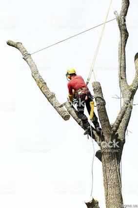 Спил аварийных деревьев любой сложности вОдессе и Области