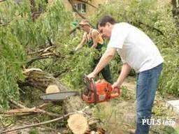 Спил дерева, покос травы , расчистка участков вывоз мусора О