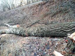 Спил деревьев, чистка от поросли и веток