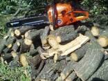 Спил деревьев Днепр - фото 1