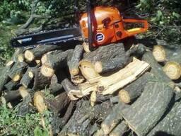 Спил деревьев Днепр