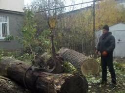 Спил деревьев Днепр - фото 3