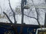 Спил деревьев Днепр - фото 5