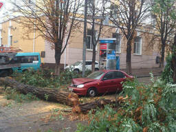 Спил деревьев! Днепропетровск. быстро и качественно!