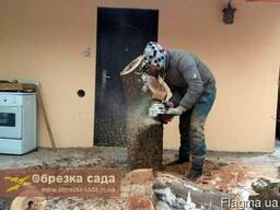 Спил деревьев Харьков