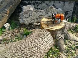 Спил деревьев Недорого, удаление аварийных веток, Расчистка