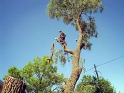 Спил деревьев. Обрезка деревьев.
