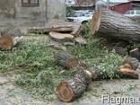 СПИЛ деревьев, Распил. Подсобники. Разнорабочие - фото 2
