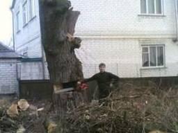 Спил деревьев, спилить деревья, ветки харьков
