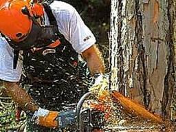 Спил деревьев, спилить, спиливание, валка, снос, срезание