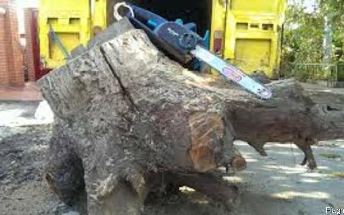 Спил и подрезка деревьев Одесса
