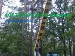 Спил и удаление деревьев Вышгород
