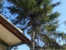 Спил, кронирование деревьев Харьков