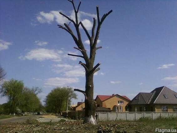 Спилим дерево,обрезка сада,расчистка территории,покос травы