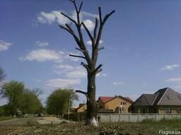 Спилим дерево, обрезка сада, расчистка территории, покос травы