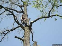 Спилить дерево, кронирование, обрезка веток сада