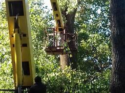 Спиливание деревьев, спил, валка деревьев, Обрезка деревьев.