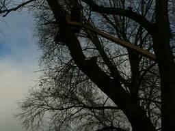 Спилить дерево. Спилить дерево в Киеве.