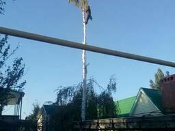 Спилить дерево в Одессе альпинисты