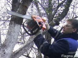 Спилить старое дерево, подрезать ветки, выкоччевать пенек