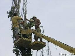 Спиливание деревьев. Экскаваторные работы всевозможные