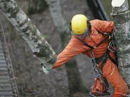 Спиливание деревьев, расположенных в стеснённых условиях