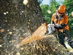 Спиливание и обрезка деревьев любой сложности