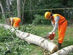 Спиливание и подрезка деревьев. Копка котлованов