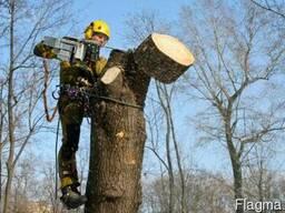 Спиливание, корчевка деревьев. Благоустройство территории.