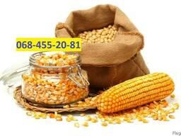 Куплю Кукурузу Запорожье Украина