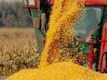 Срочно продам фермерское хозяйство. - фото 1