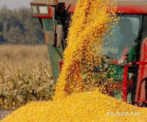 Срочно продам фермерское хозяйство.