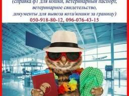 Срочно сопроводительные документы для кошки (справка ф1 и т.