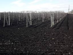 Столбики виноградные 65000шт