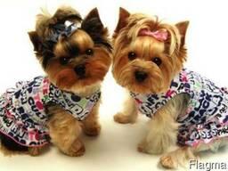 Стрижка собак, пошив одежды для животных