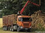 Сухие дрова сосна колотые Киев Киевская область с доставкой - фото 4