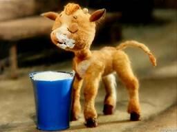 Сухое молоко Лактофит-ТП Экстра для телят,поросят